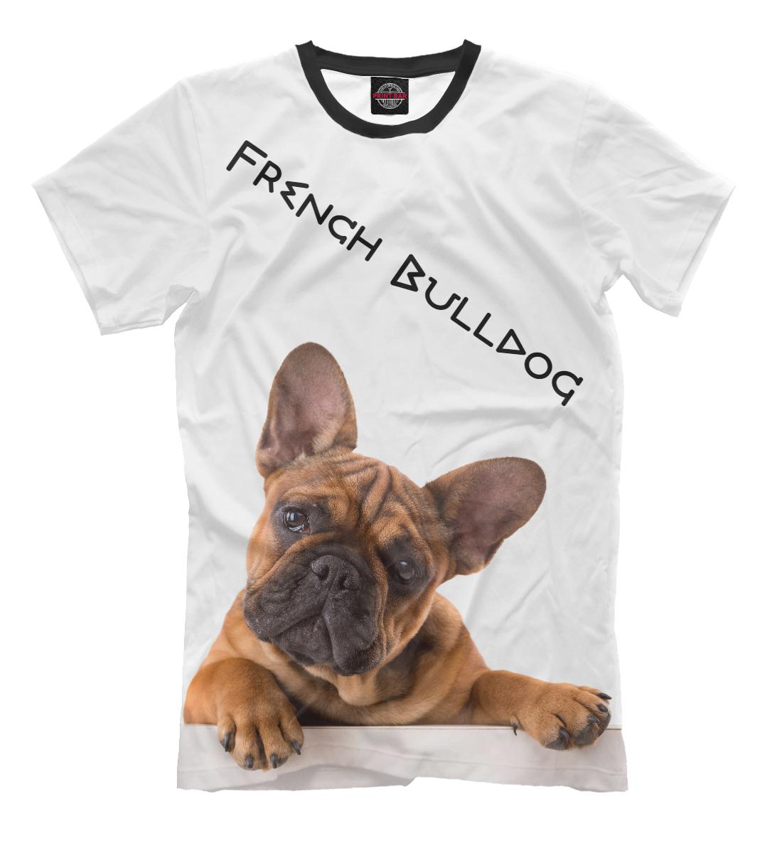 Фото - French Bulldog french bulldog