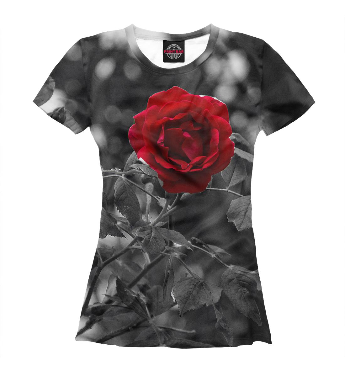 Фото - Красная роза красная роза