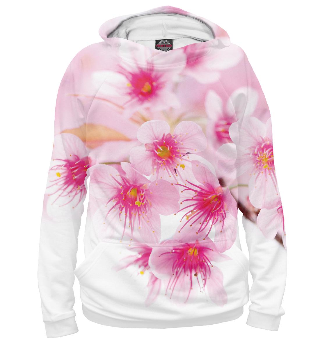 Купить Вишнёвый цвет, Printbar, Худи, CVE-219744-hud-2