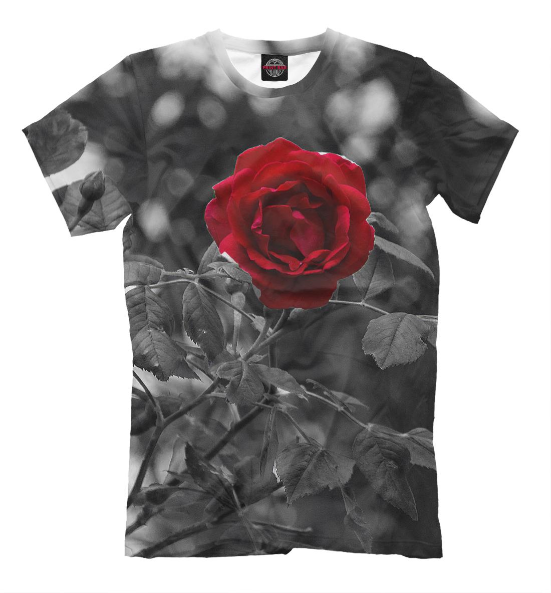 Фото - Красная роза роза красная