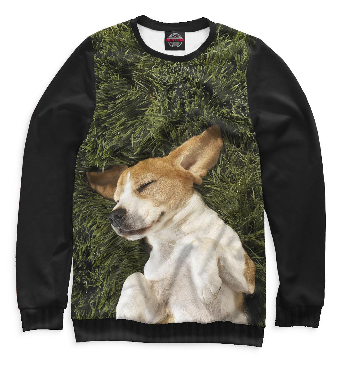 Купить Собаки, Printbar, Свитшоты, DOG-233278-swi-2