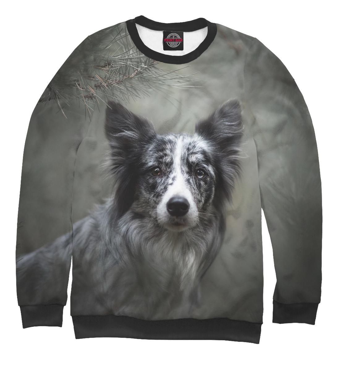 Купить Собака в хвойном лесу, Printbar, Свитшоты, DOG-577480-swi-1