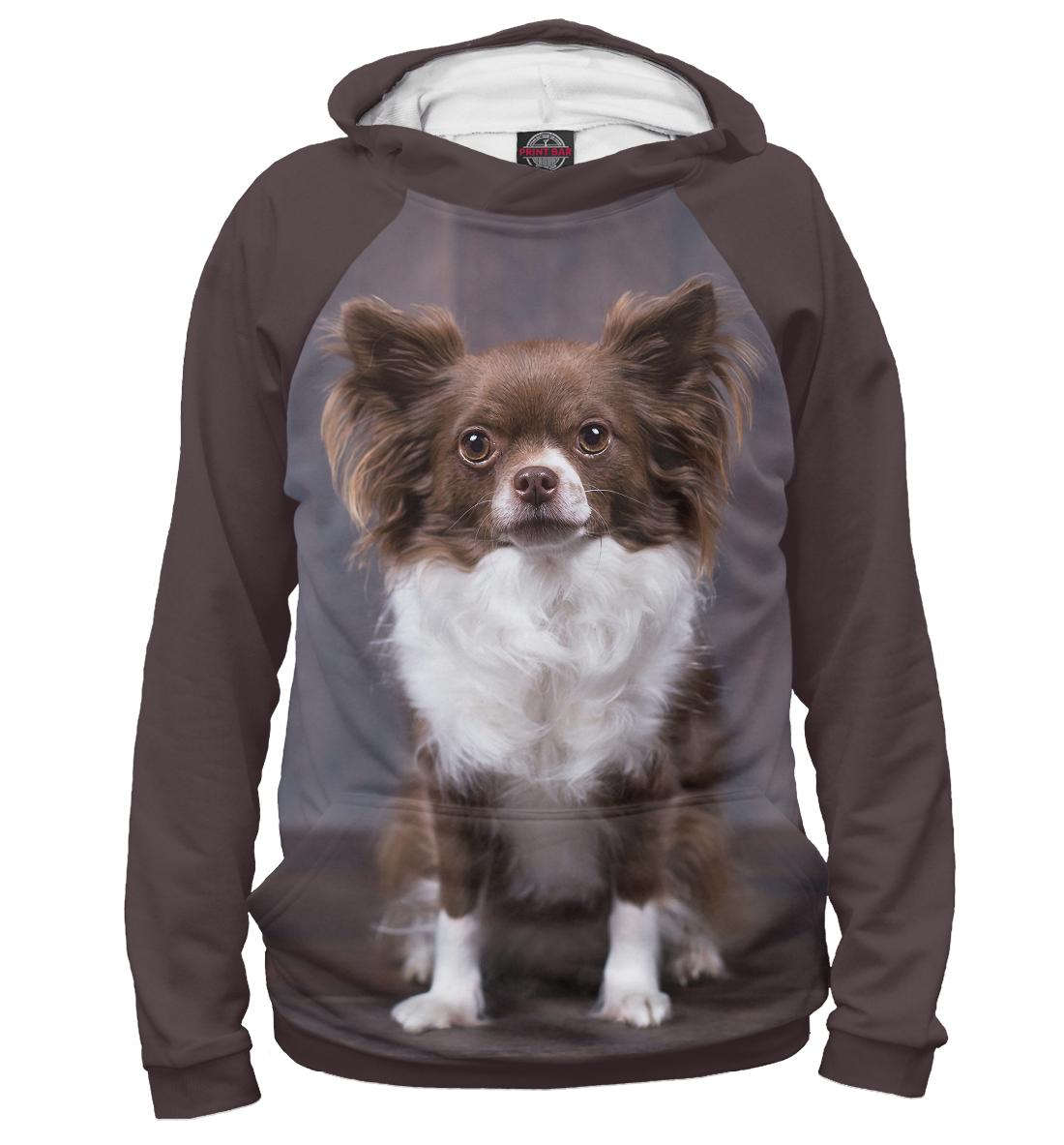 Купить Собака, Printbar, Худи, DOG-608790-hud-1