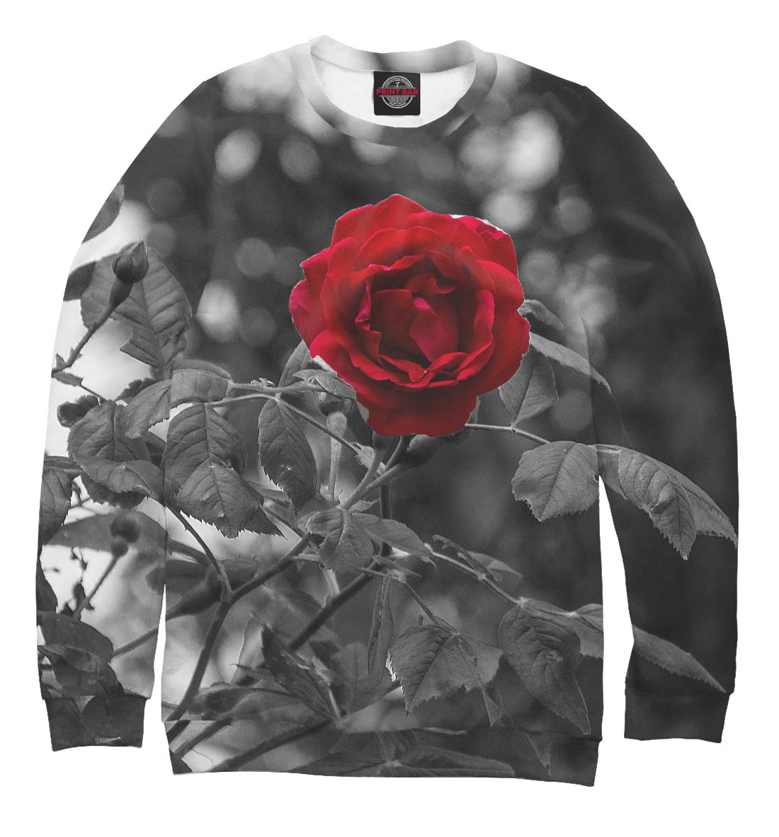 Купить Красная роза, Printbar, Свитшоты, CVE-331983-swi-1