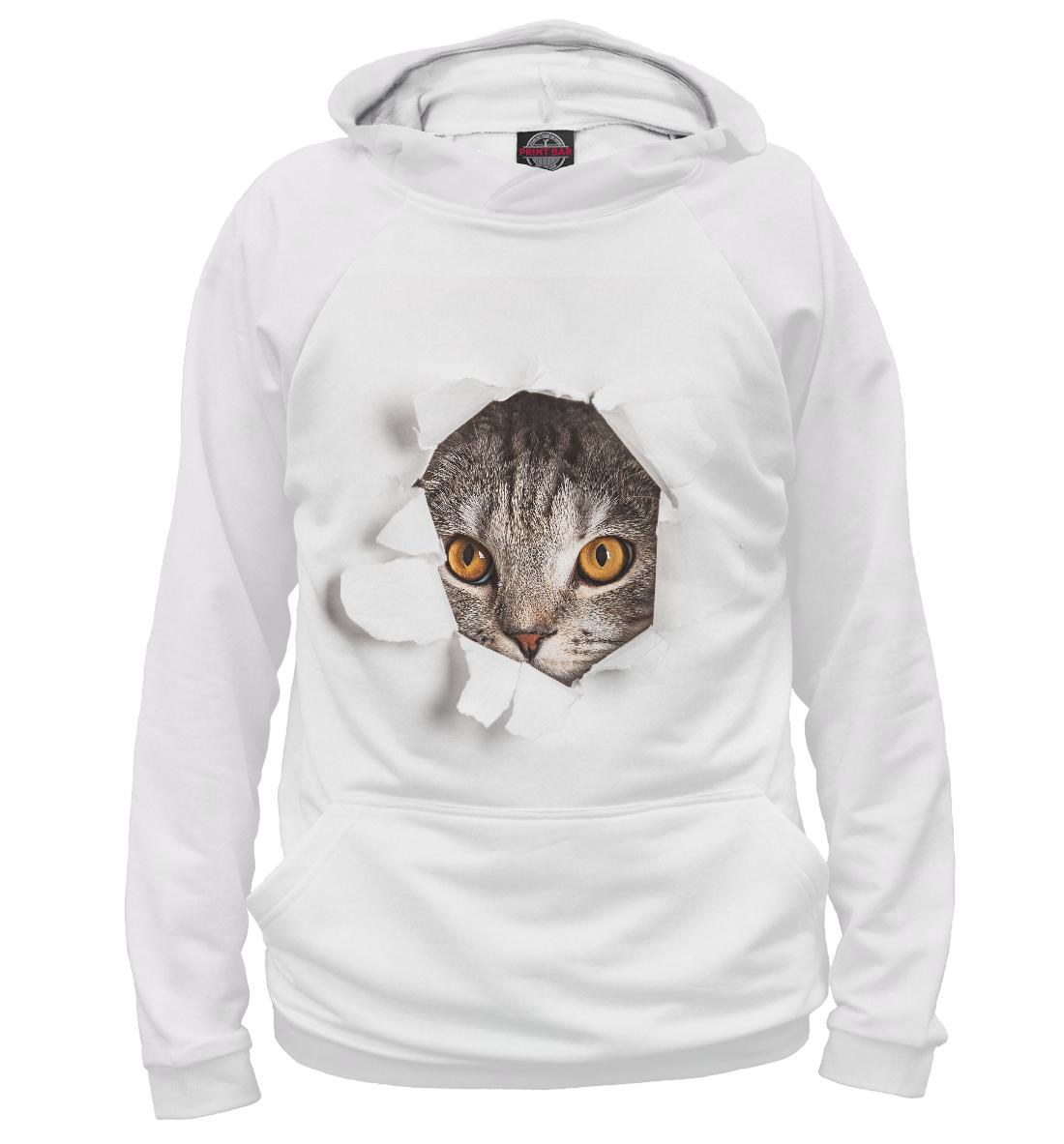 Купить Котик смотрящий в дырочку, Printbar, Худи, CAT-375903-hud-2