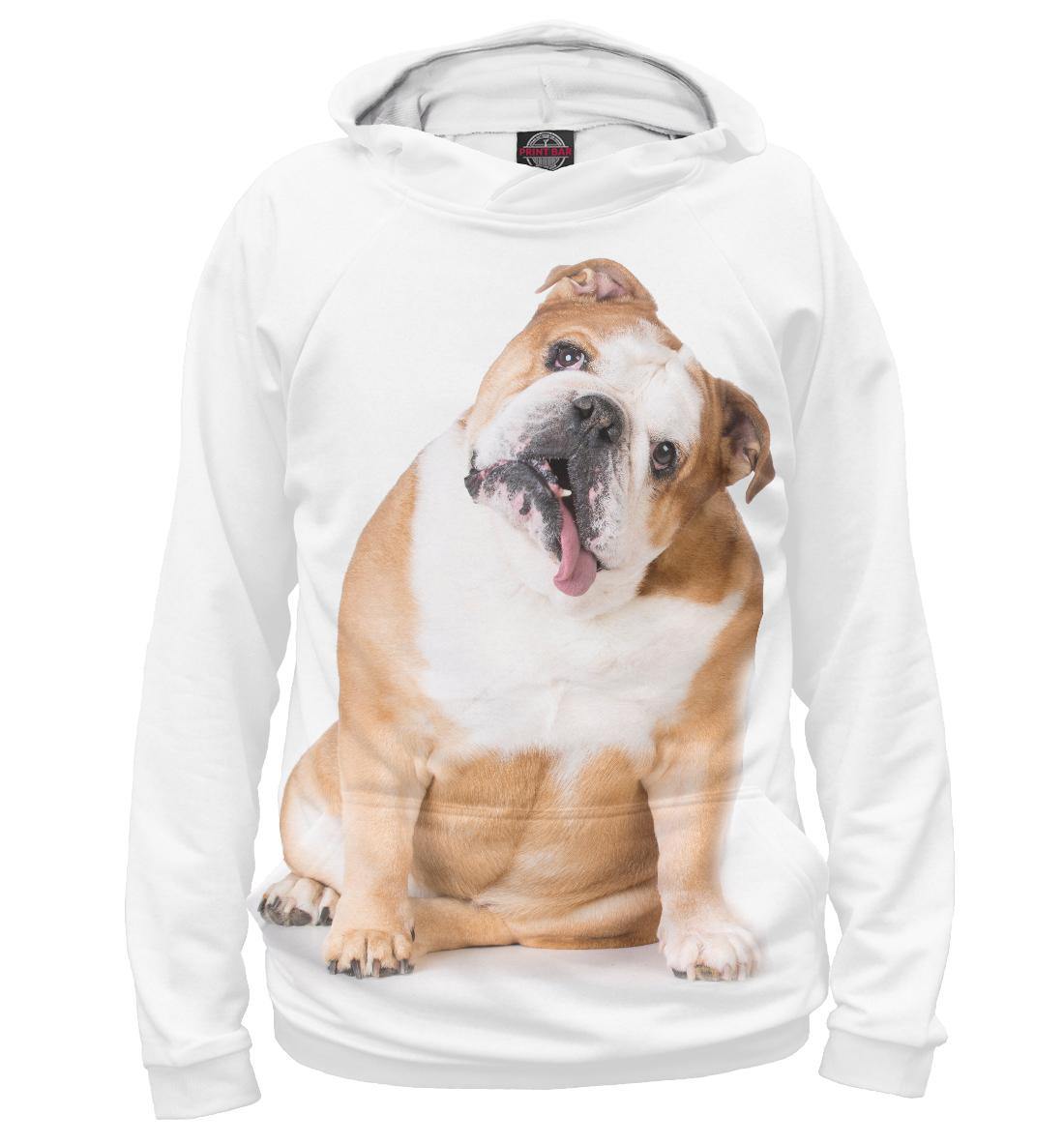 Купить Бульдог, Printbar, Худи, DOG-127602-hud-1