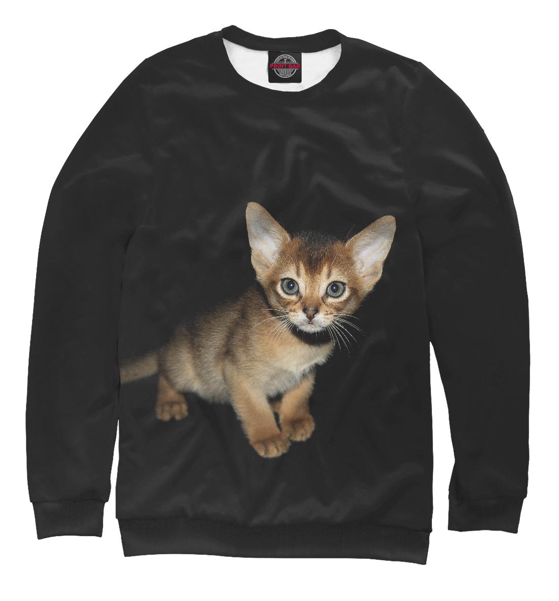 Купить Котенок-абиссинец, Printbar, Свитшоты, CAT-414455-swi-2