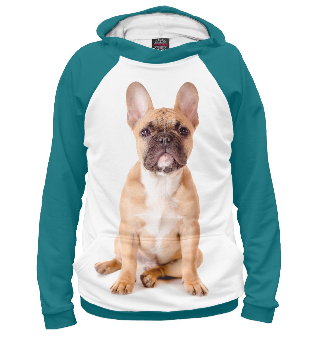 Купить Бульдог, Printbar, Худи, DOG-596235-hud-1