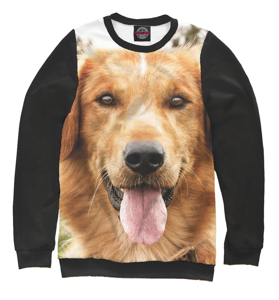 мужской свитшот с рисунком собаки