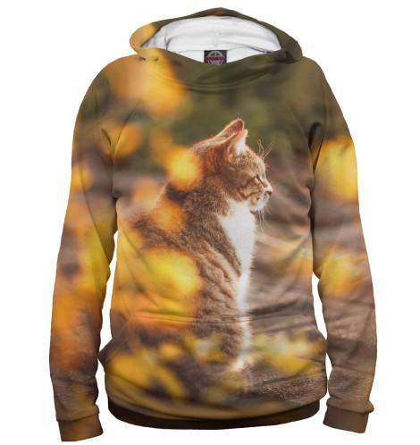 Мужское худи Осенний кот