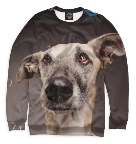 Мужской свитшот Собаки